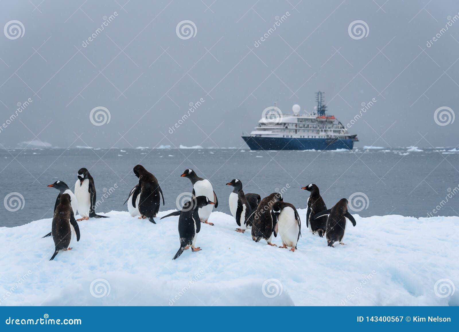 De Gentoopinguïnen die op een ijsberg met cruise drijven verschepen op de achtergrond, Paradise-Baai, Antarctica