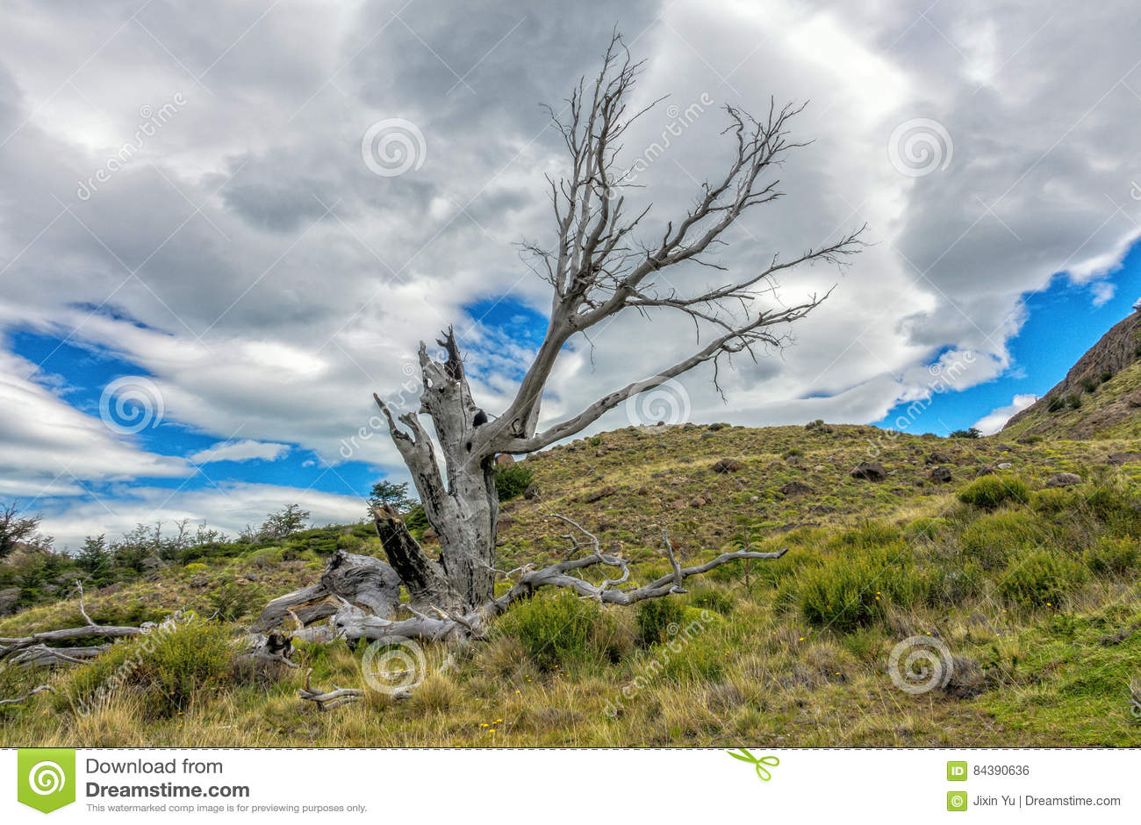 De gestorven oude boom