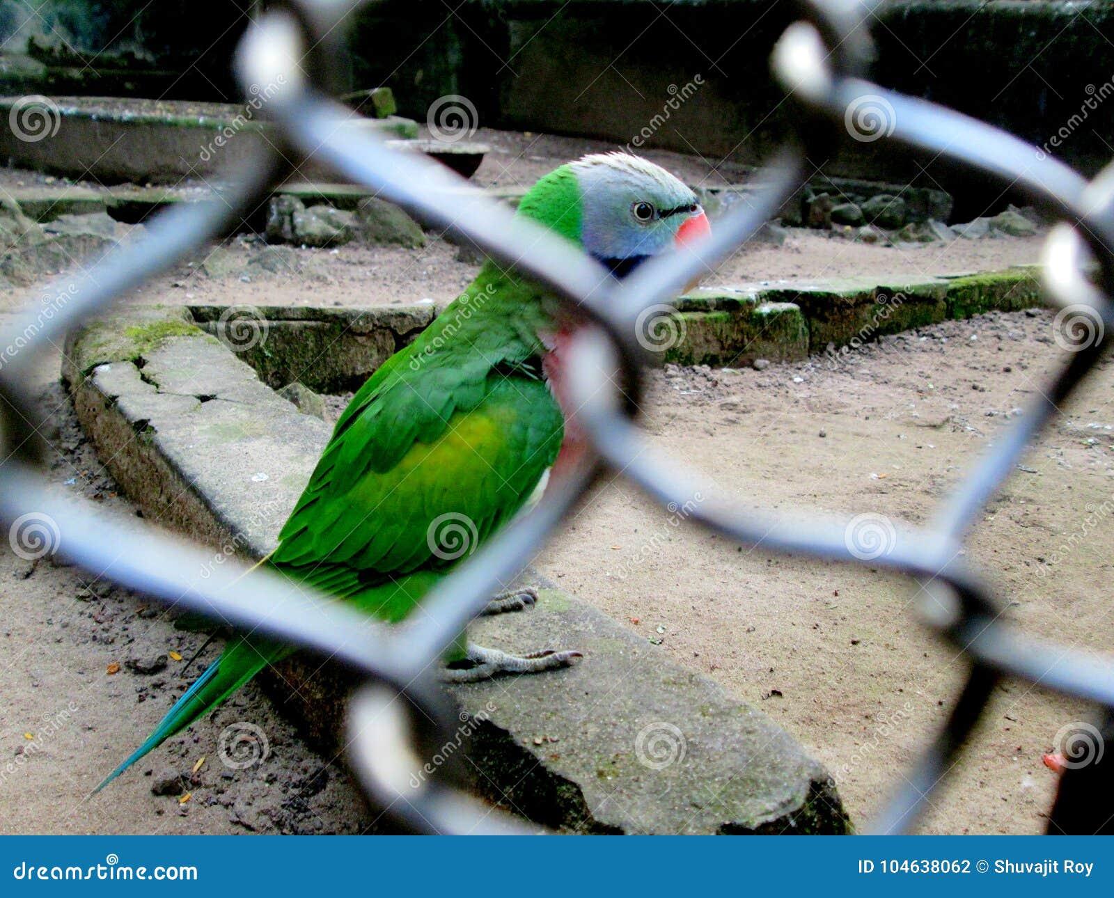Download De Gevangenschap, Gaf Haar Vrij Stock Foto - Afbeelding bestaande uit unhappiness, mooi: 104638062