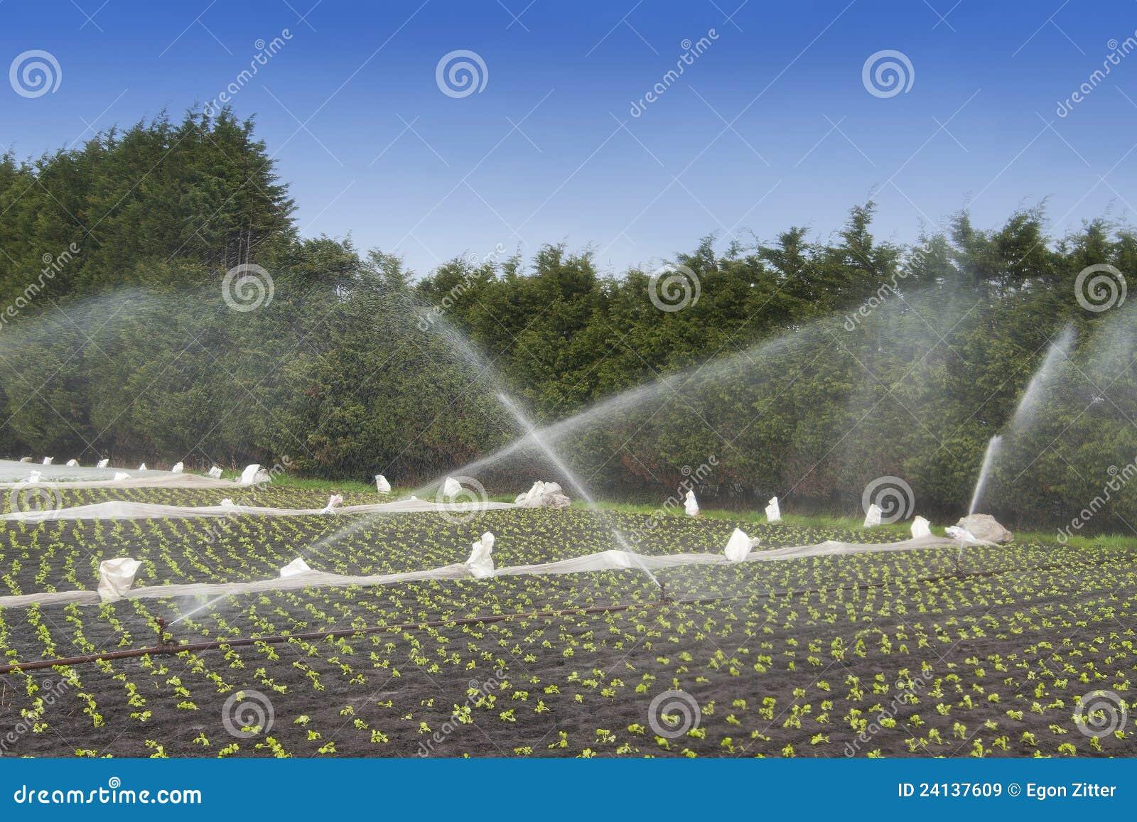 De gewassenirrigatie van het water