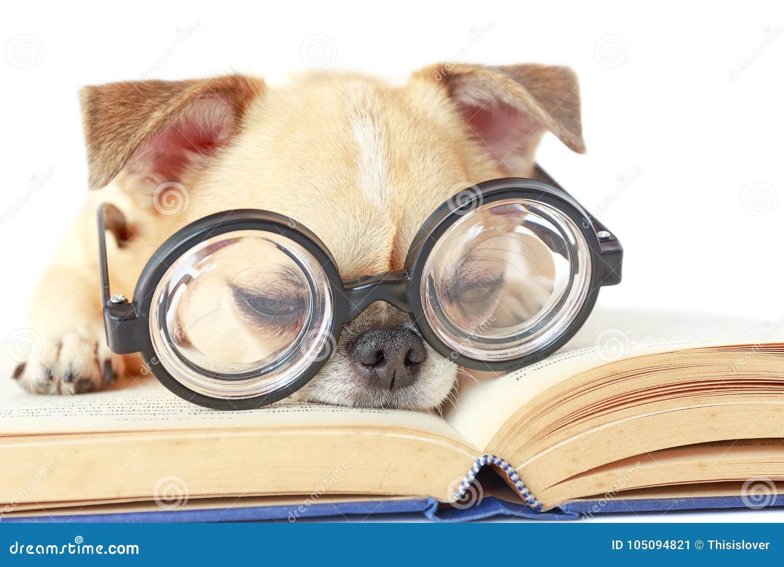 De glazen van de hondslijtage nerd