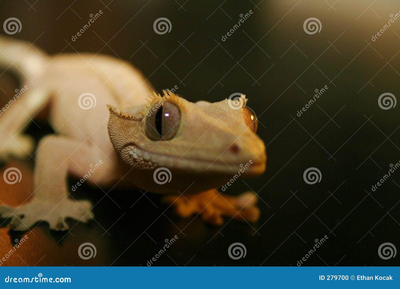 De Glimlachen van de gekko