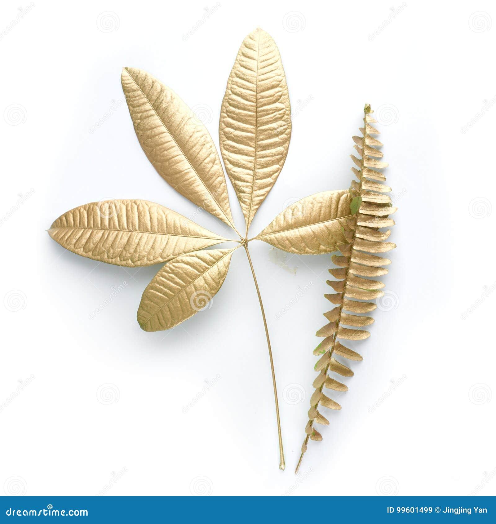 De gouden elementen van het bladontwerp Decoratieelementen voor uitnodiging, huwelijkskaarten, valentijnskaartendag, groetkaarten