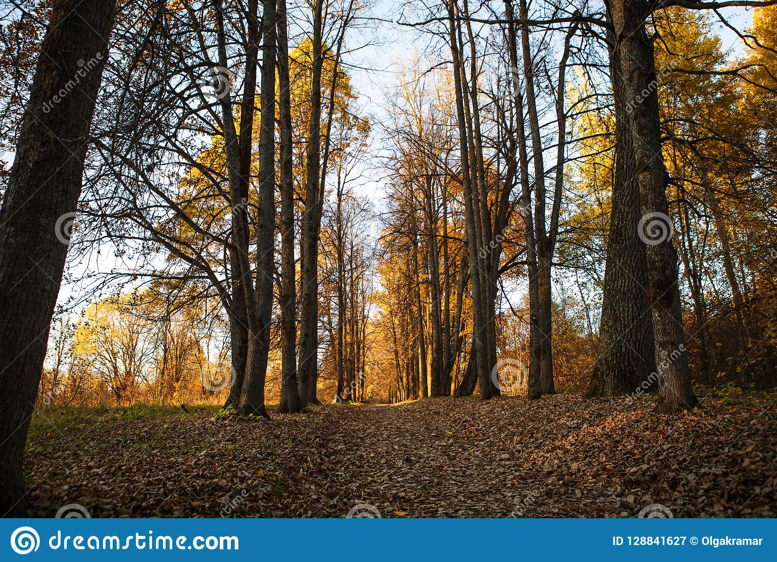 De gouden herfst, gele bomen in zonlicht, underfoot bladeren