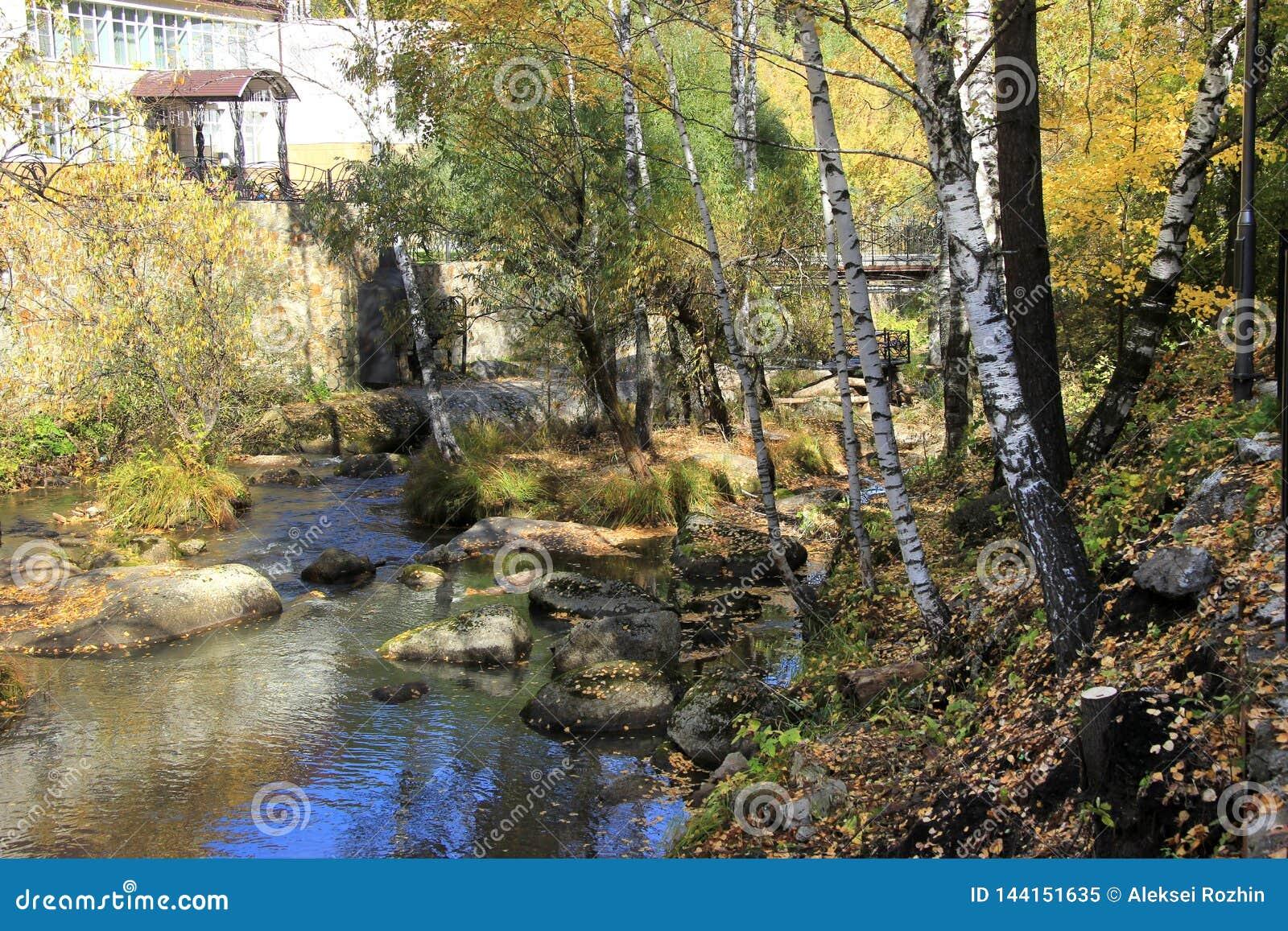 De gouden herfst in het Altai-gebied in Rusland Mooi landschap - weg in de herfstbos