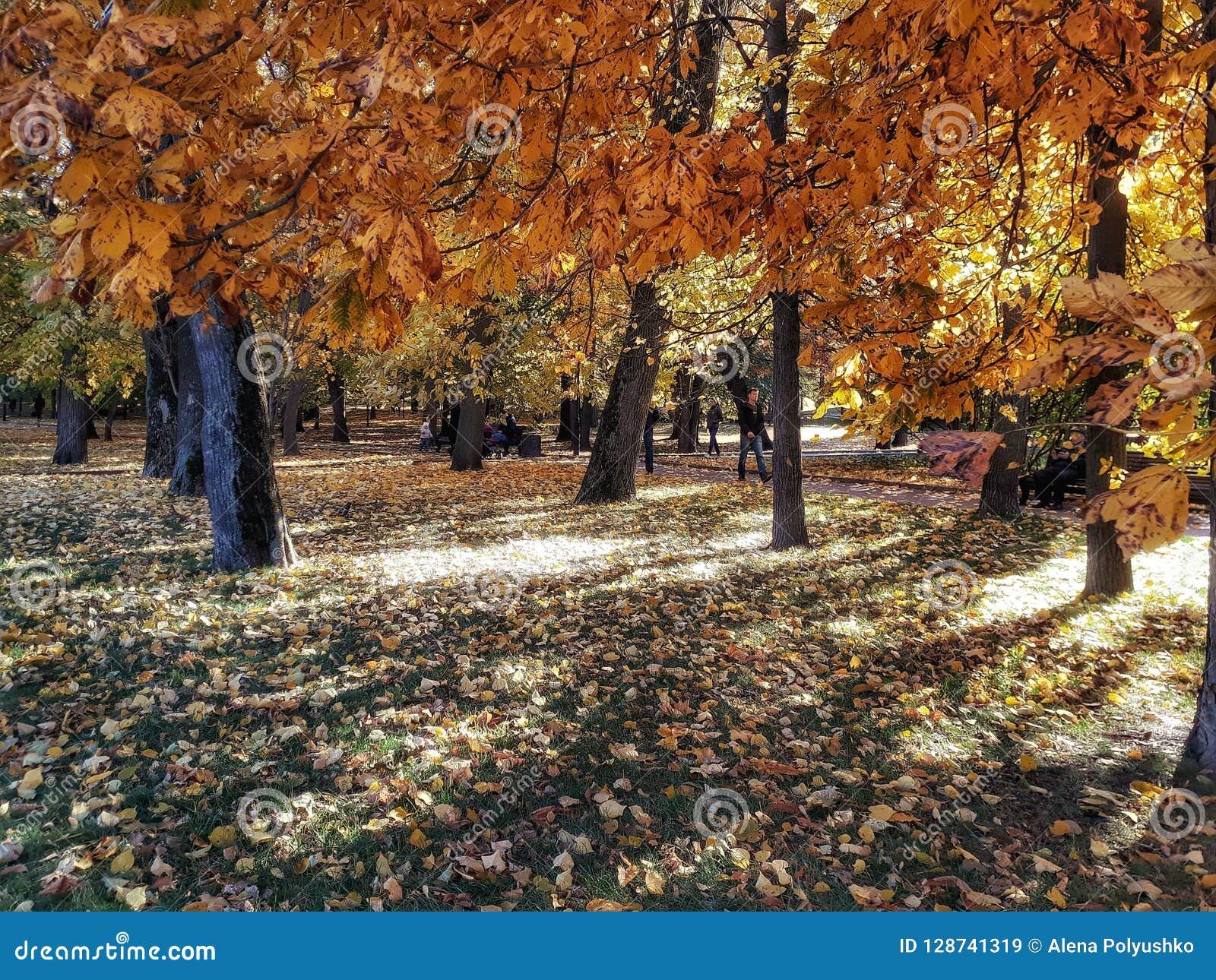 De gouden herfst in het park