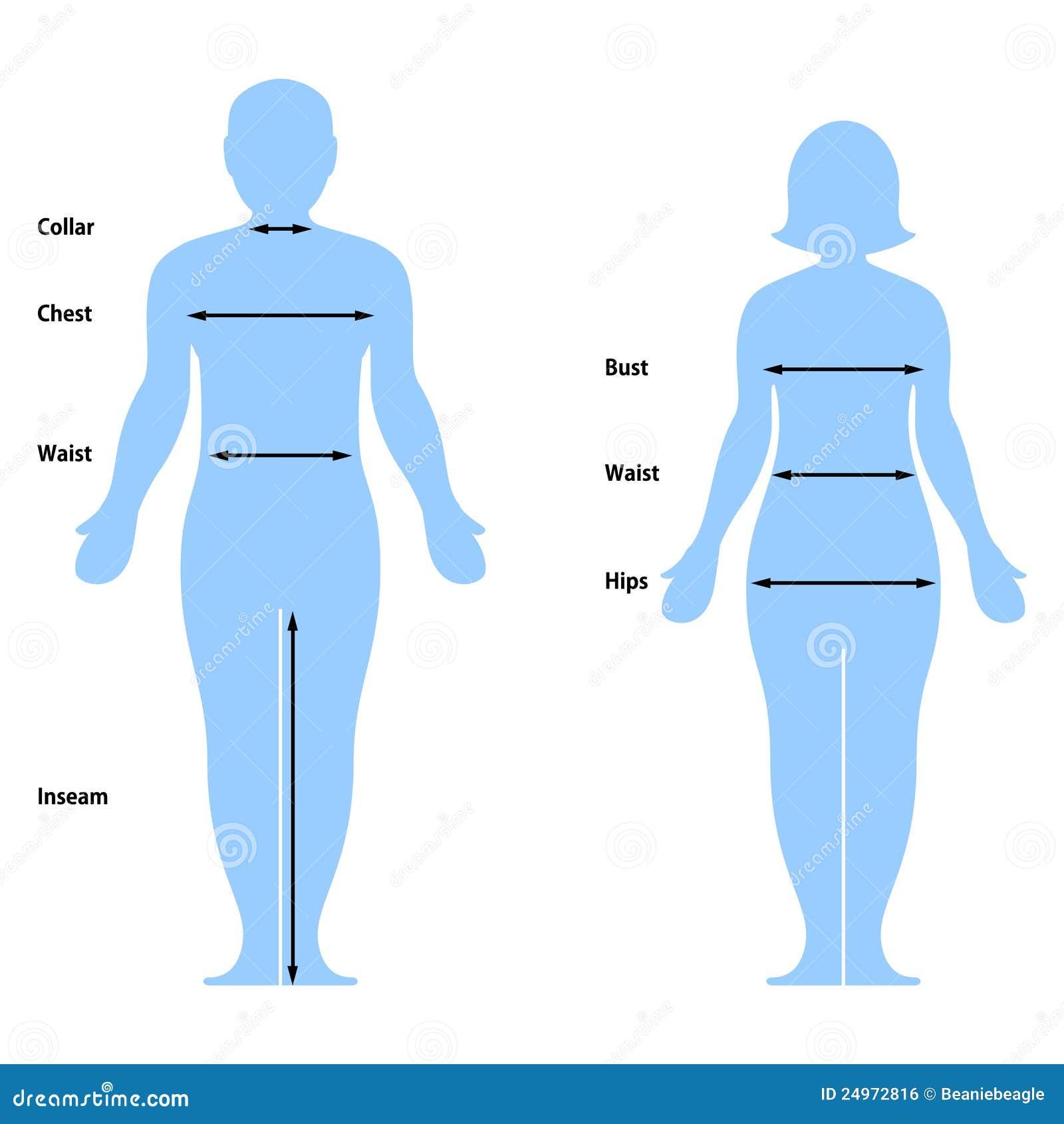 De Grafiek van de Grootte van de kleding