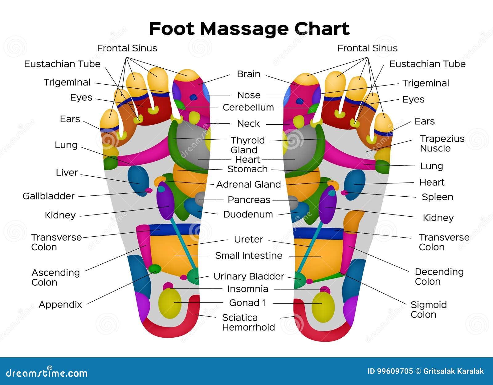 De grafiek van voetreflexology met beschrijving van de interne organen en de lichaamsdelen Vector illustratie anatomie