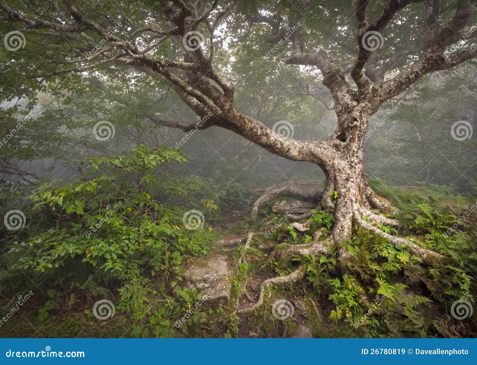 De griezelige fantasie van de mist nc van de boom fairytale griezelige bos stock afbeelding - Deksel van de boom ...