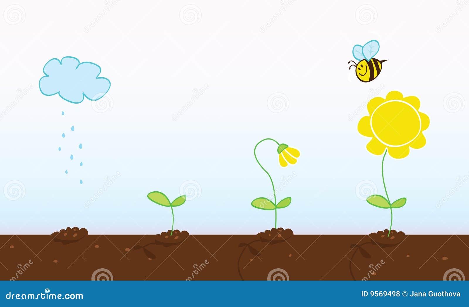 De groeiende stadia van de bloem