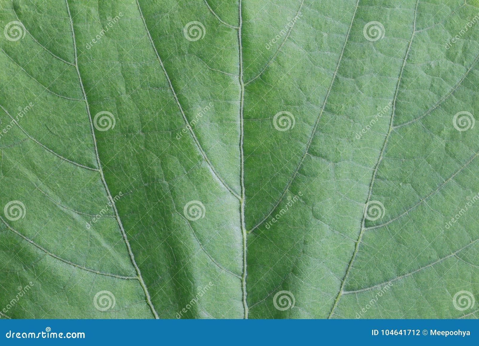 Download De Groene Achtergrond Van De Bladoppervlakte Stock Foto - Afbeelding bestaande uit helder, plantkunde: 104641712