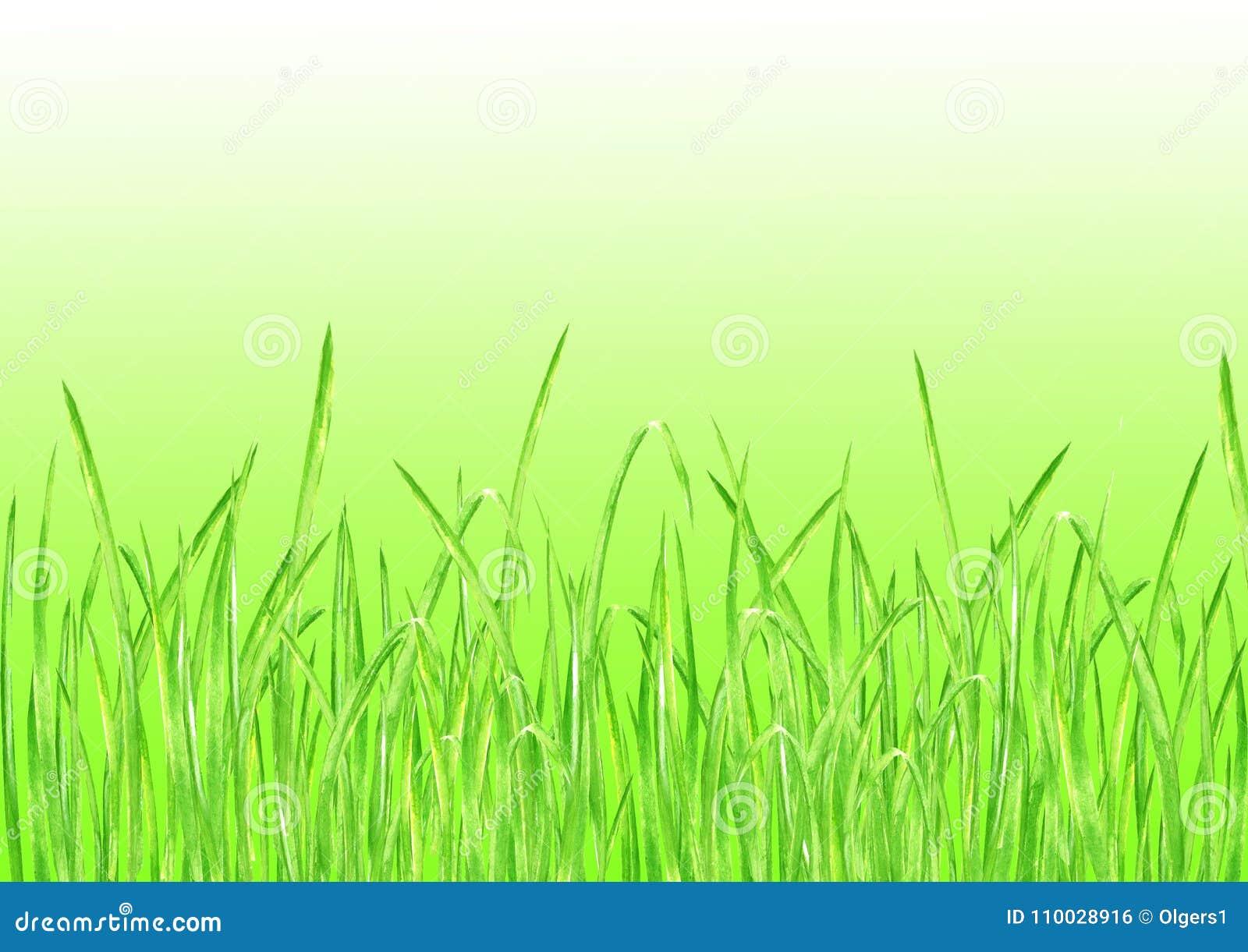 De groene Achtergrond van de Graszomer