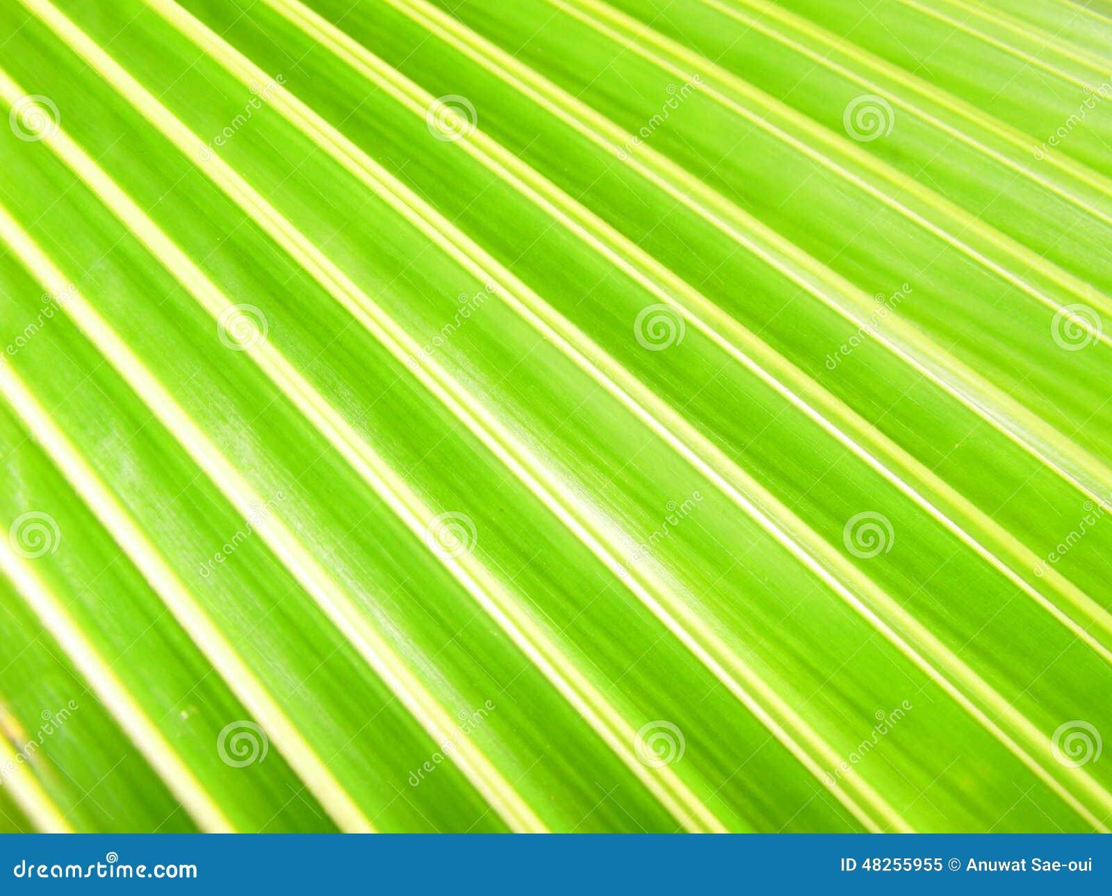 De groene Achtergrond van het Blad