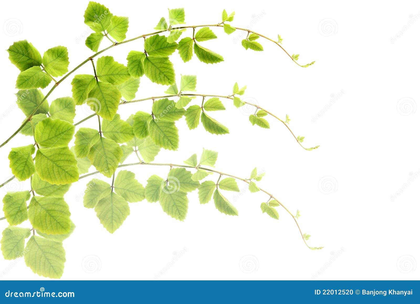 De groene bladeren maken patroonachtergrond.