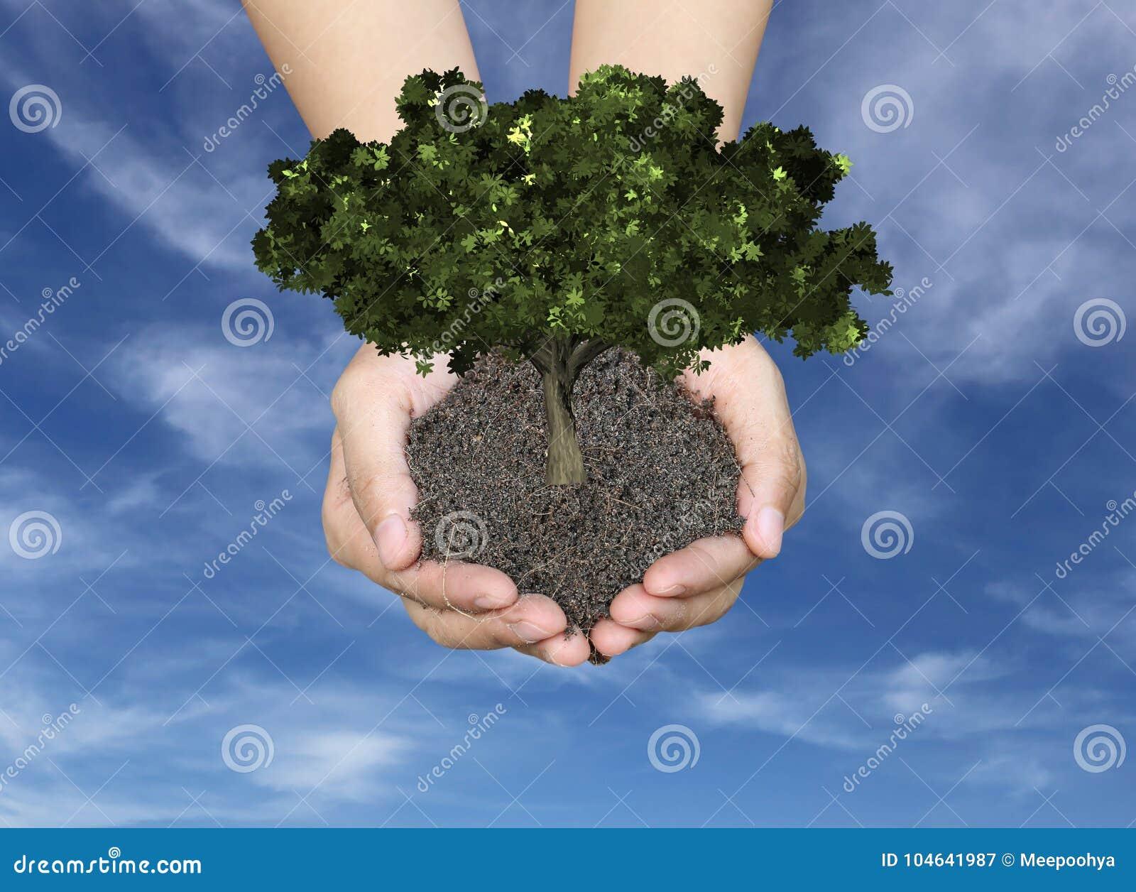 Download De Groene Boom Bij Mensen Overhandigt En Heeft Ter Plaatse Blauwe Hemelbackgrou Stock Afbeelding - Afbeelding bestaande uit growing, zaad: 104641987