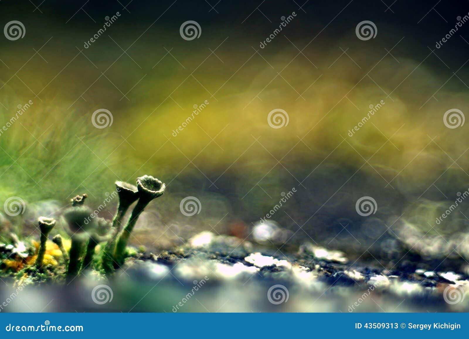 De groene macroaard van de mosmicrokosmos