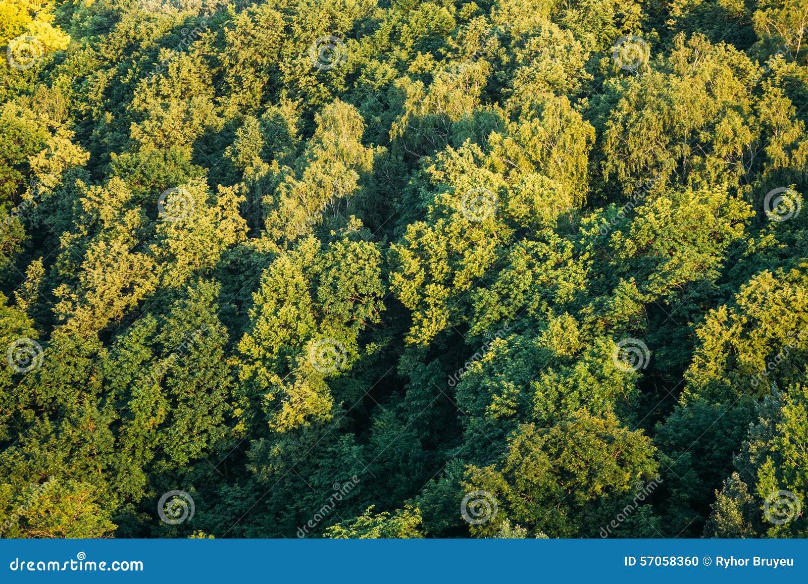 De groene Zomer Sunny Forest Spring Background