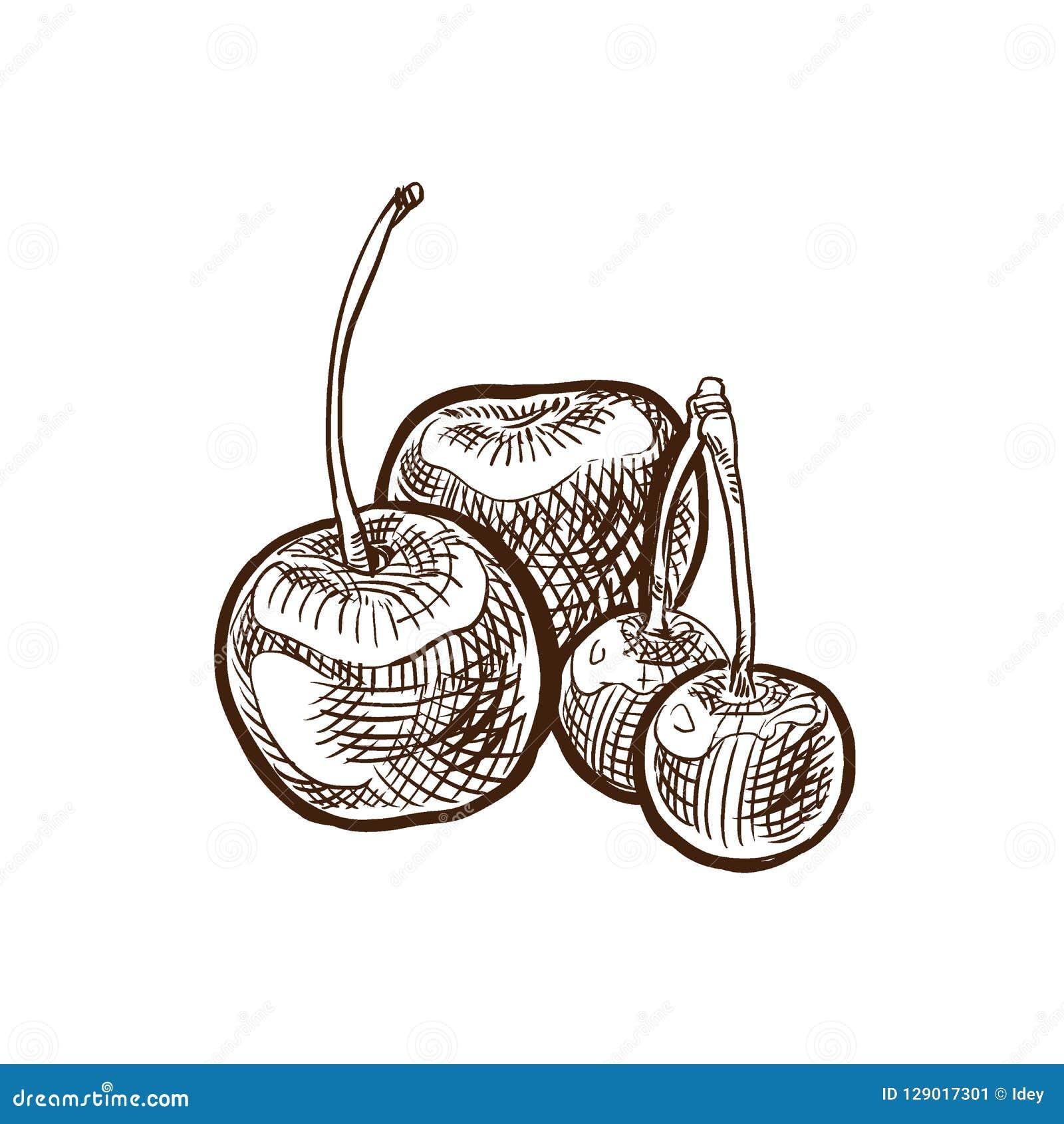 De Groenten en de vruchten van de de herfstoogst Zoete, rijpe kers op tak