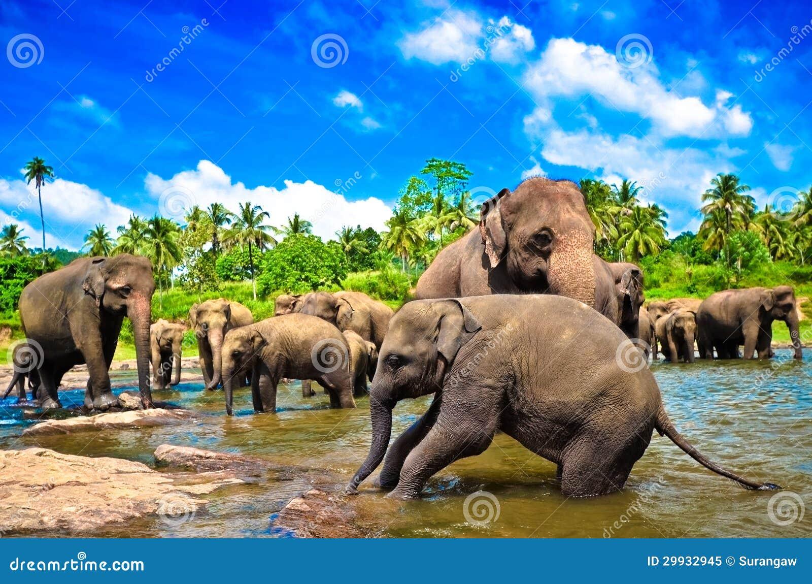 De groep van de olifant in de rivier