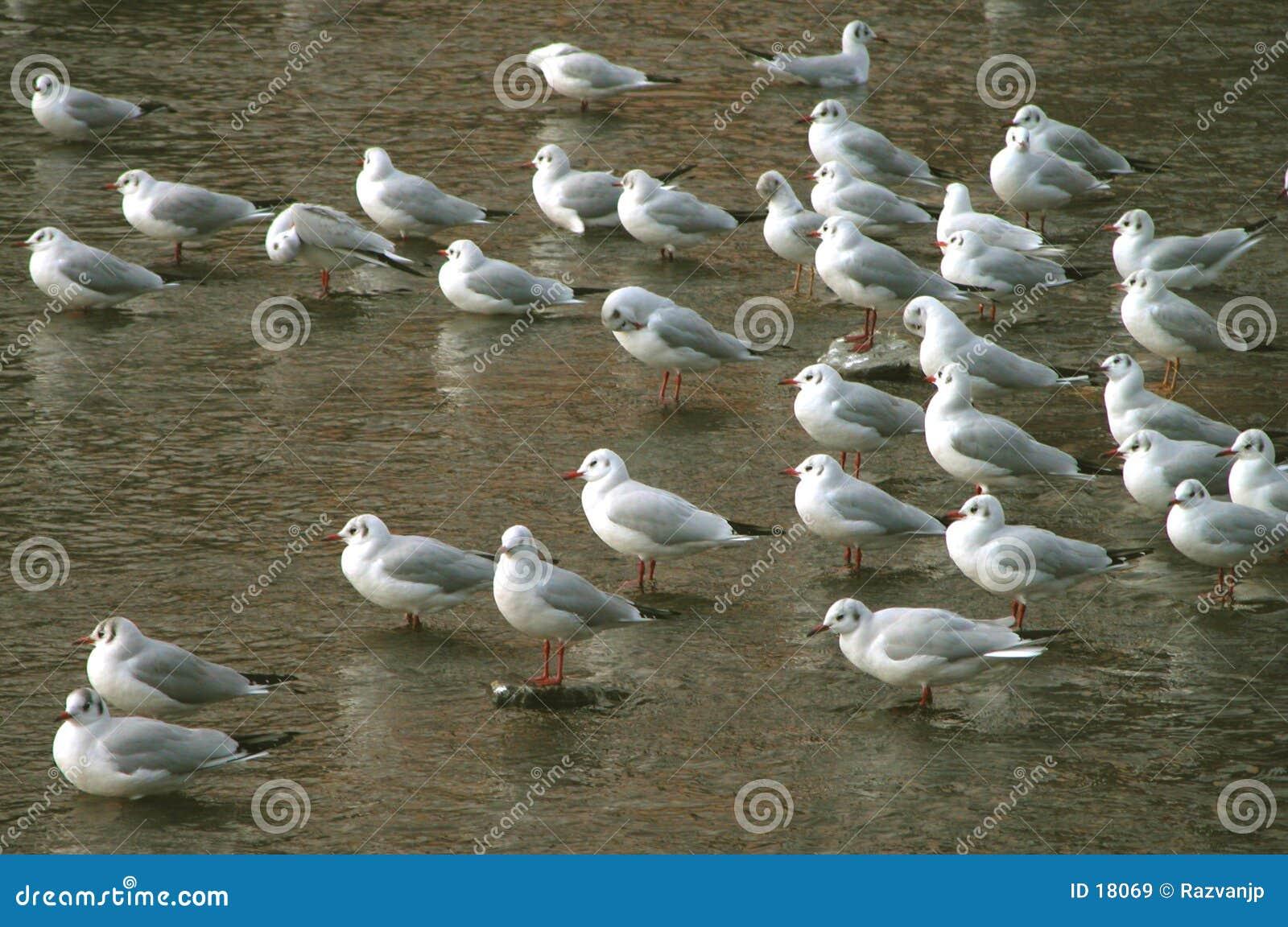 De groep van vogels