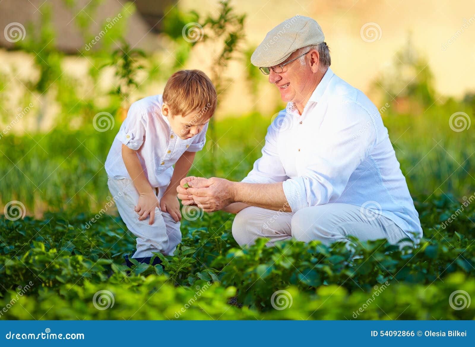 De grootvader verklaart kleinzoon de aard van de installatiegroei