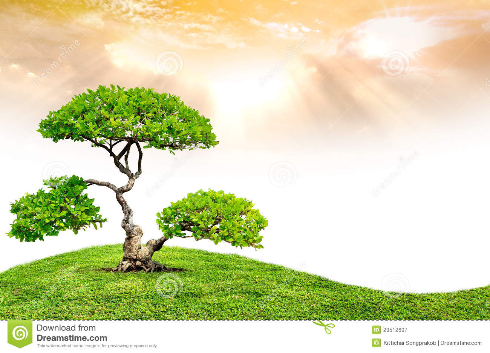 De grote boom