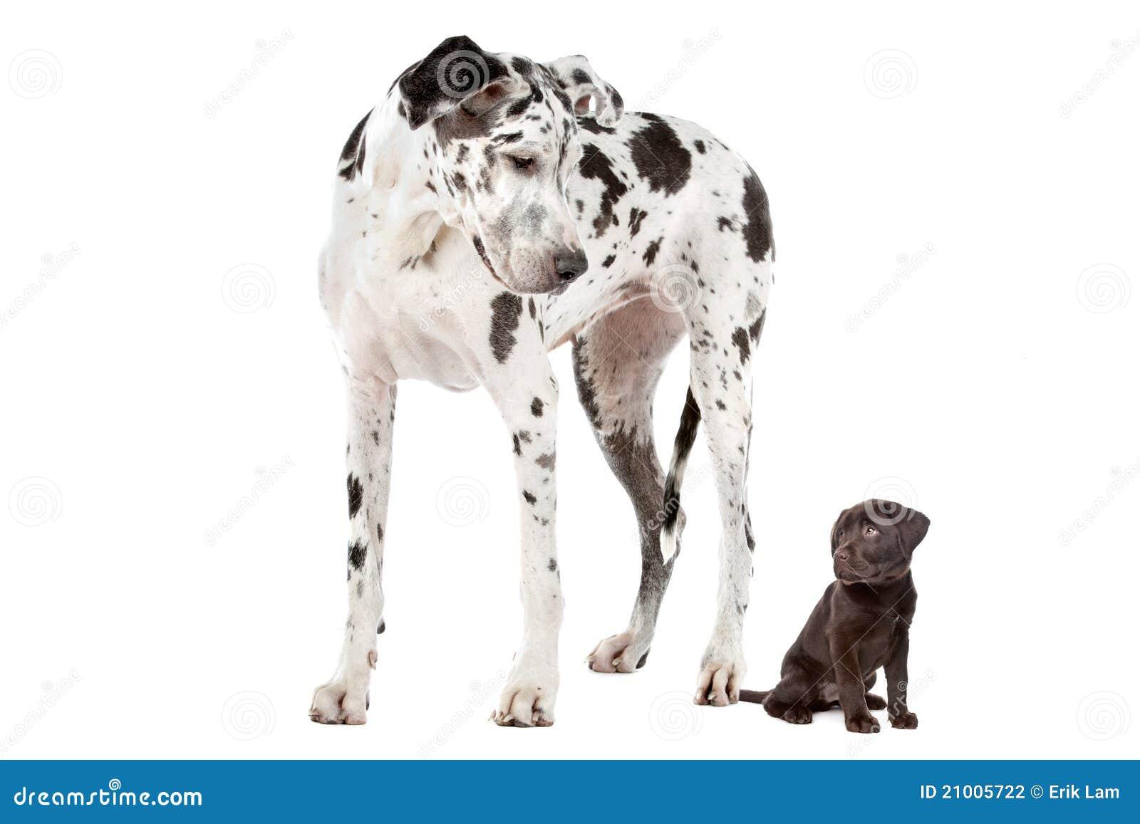 Small Dog Barking At Big Dog