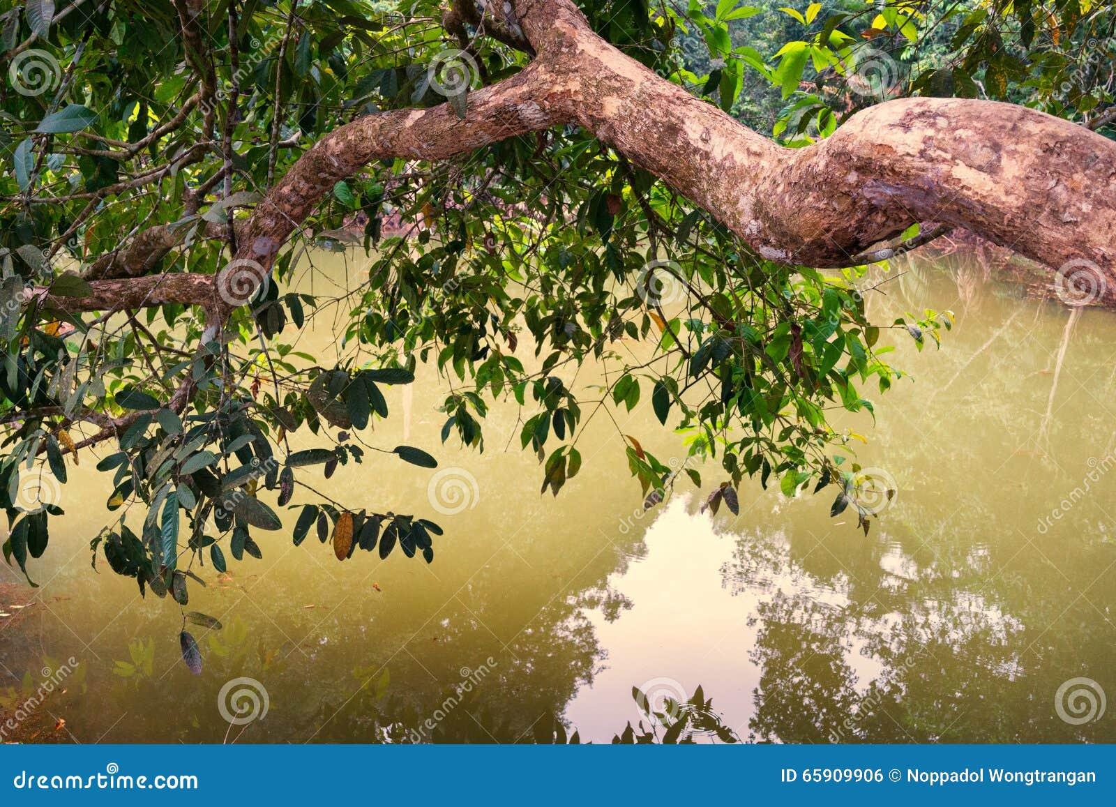 De grote tak van boom leunt uit over water stock foto   afbeelding ...
