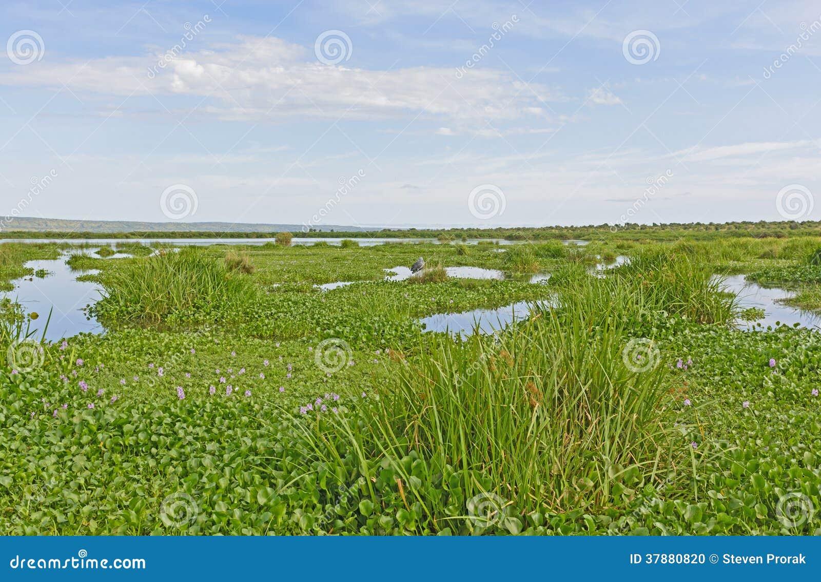 De Habitat van het Shoebillmoerasland Volledig met Shoebill