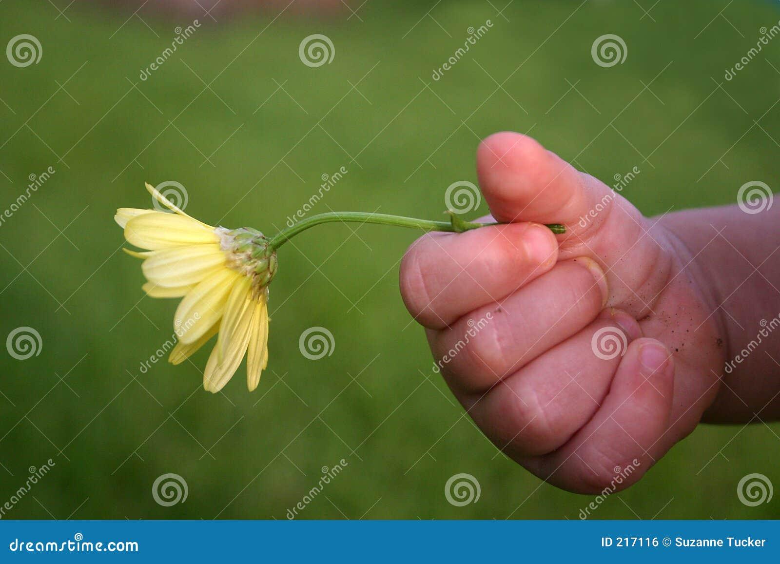 De hand die van de peuter gele bloem buiten houdt