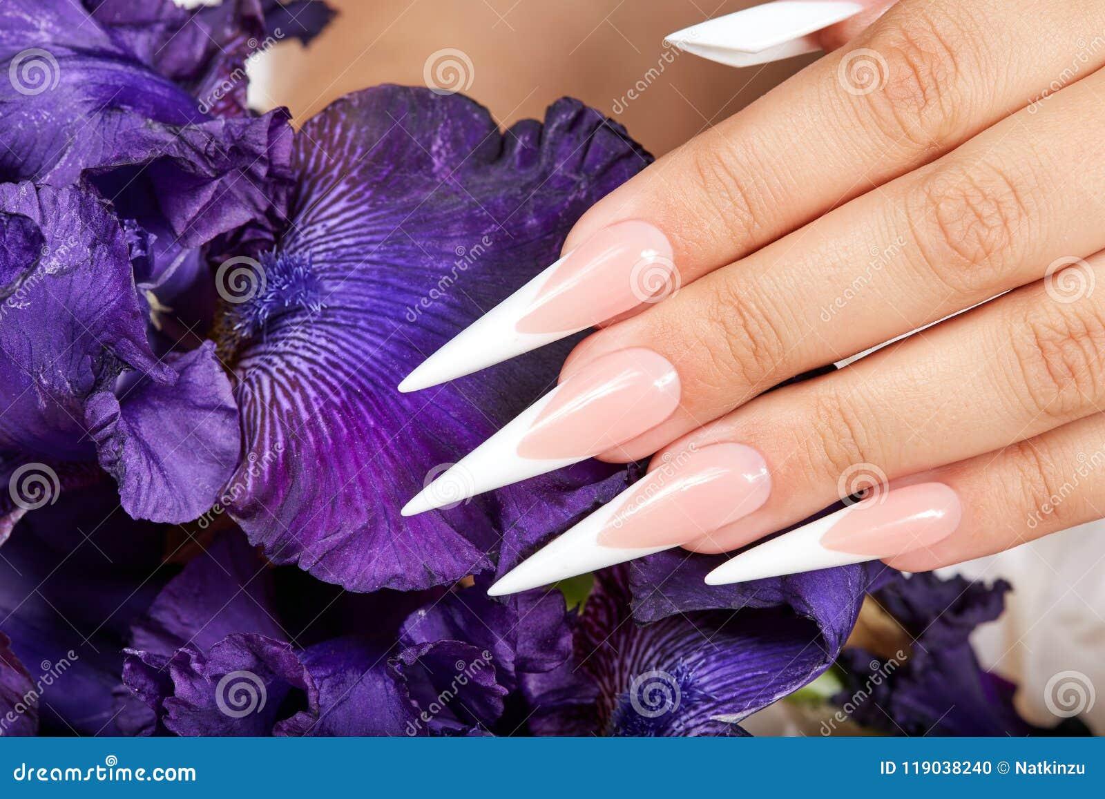De hand met het lange kunstmatige Frans manicured spijkers en een purpere Irisbloem