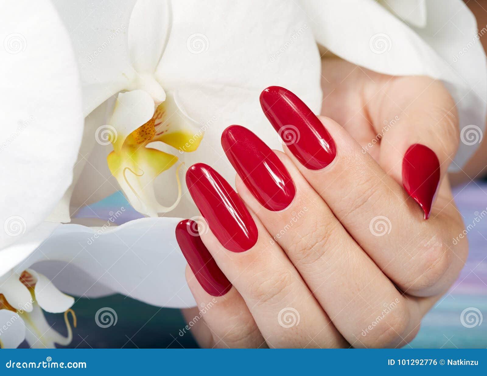 De hand met lange kunstmatig manicured spijkers en orchideebloem