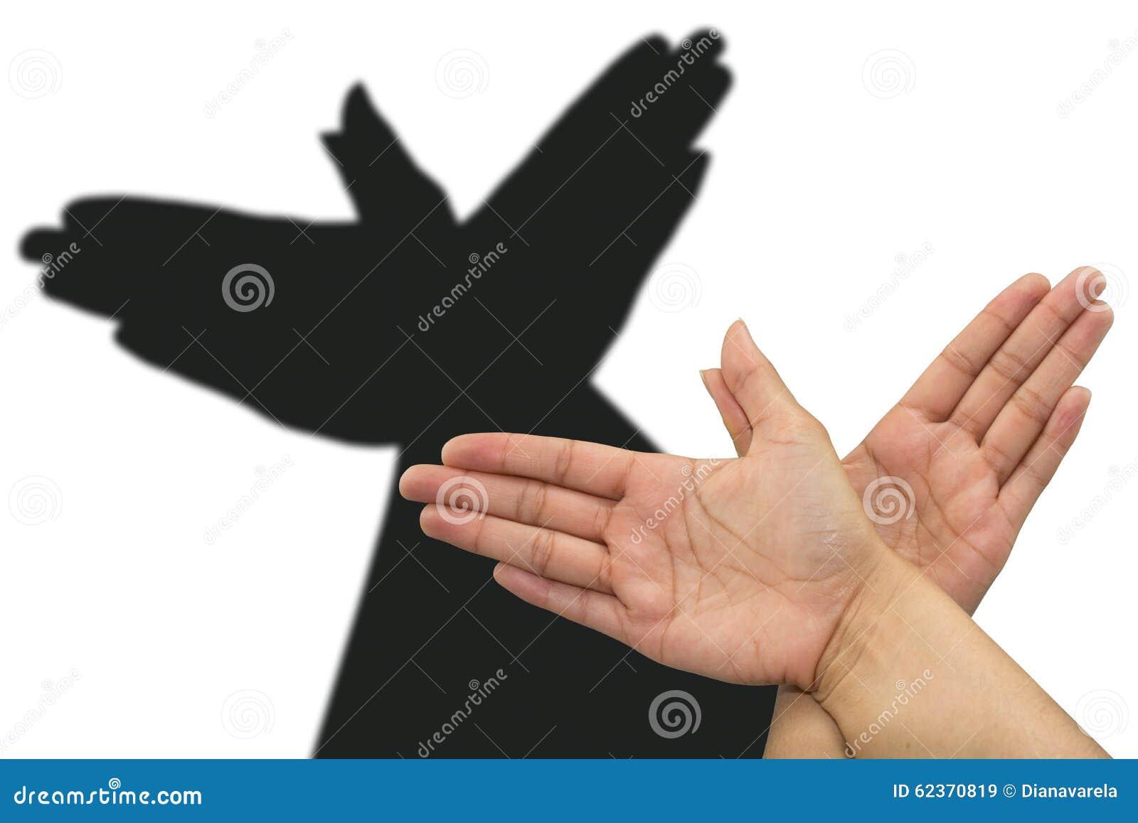 De hand van de duifschaduw