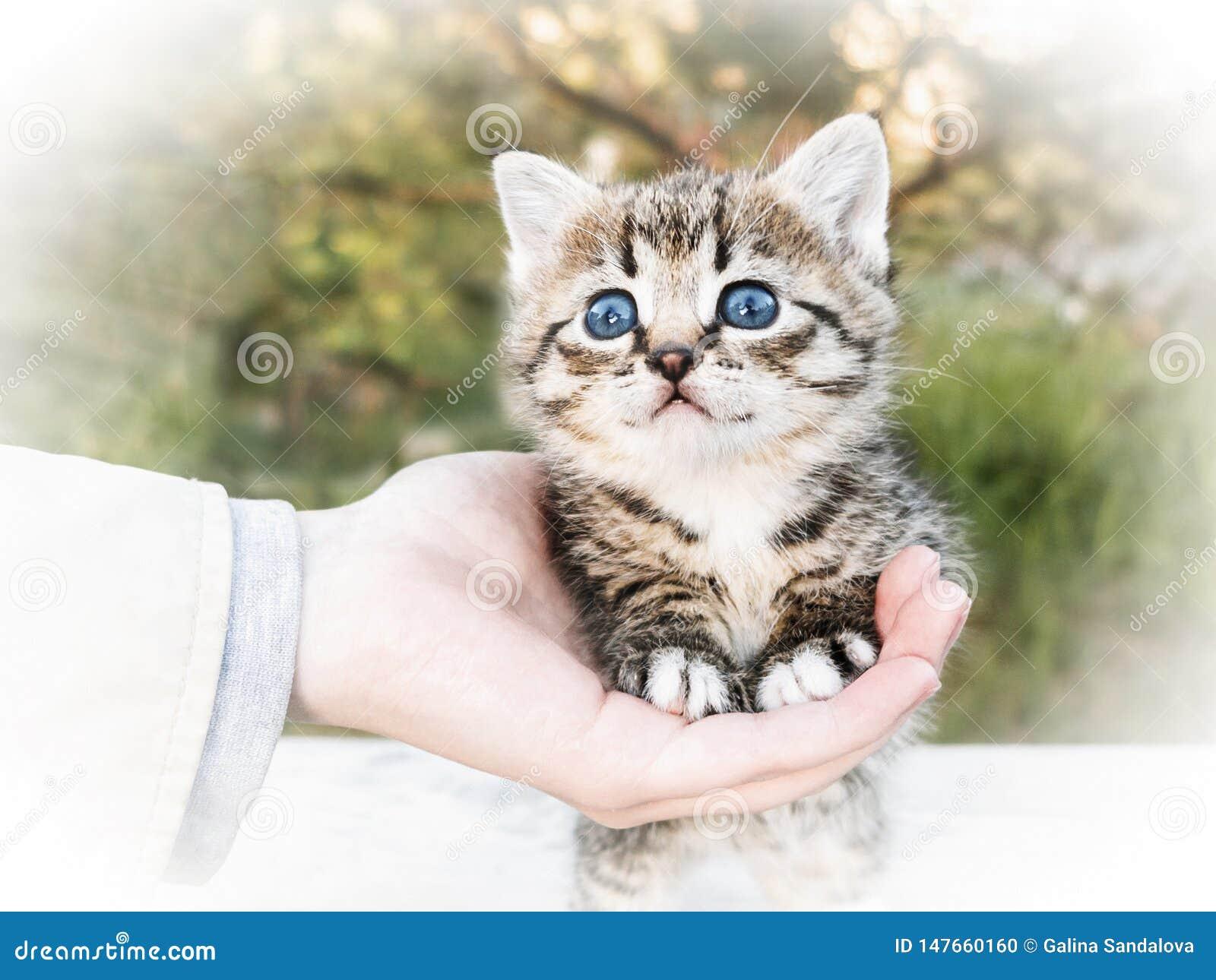 De hand van een vrouw houdt voor de poten die van een klein leuk katje zich op een lijst bevinden, in openlucht