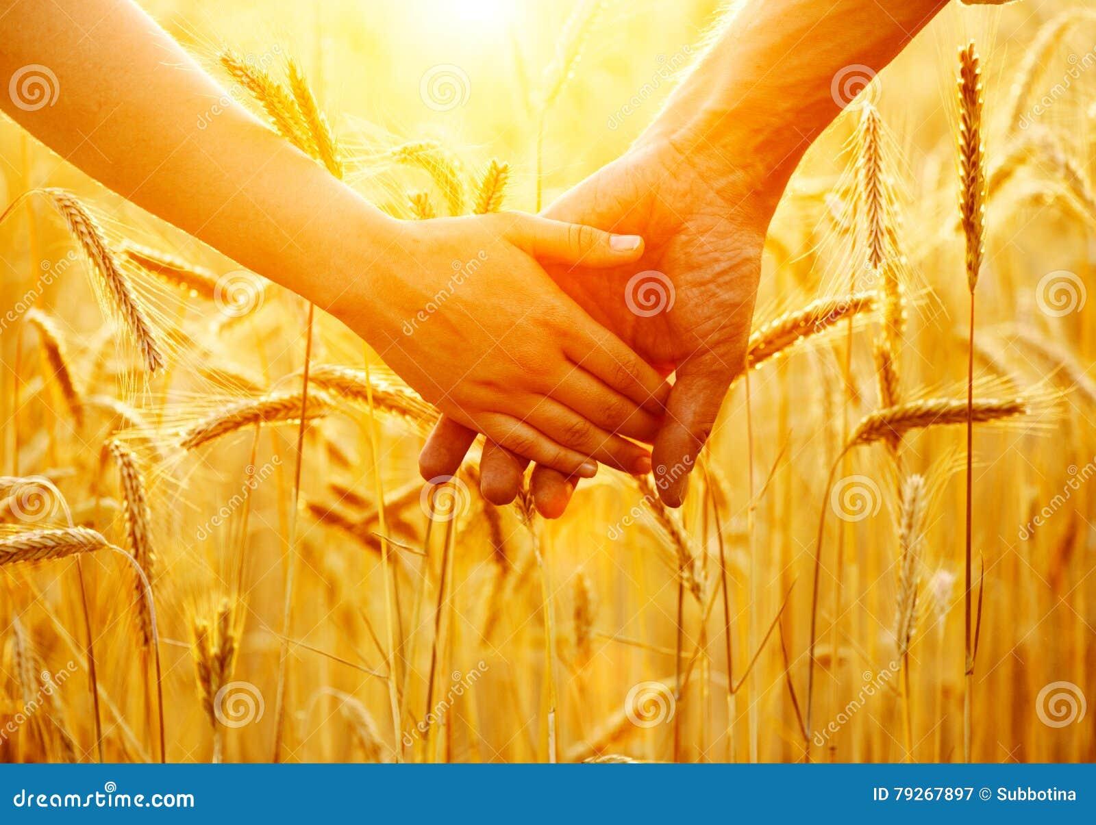De handen van de paarholding en het lopen op gouden tarwegebied