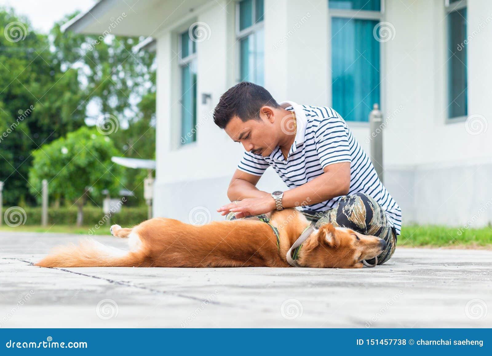 De handenmens vindt vlotik op het haar van de hondhuid