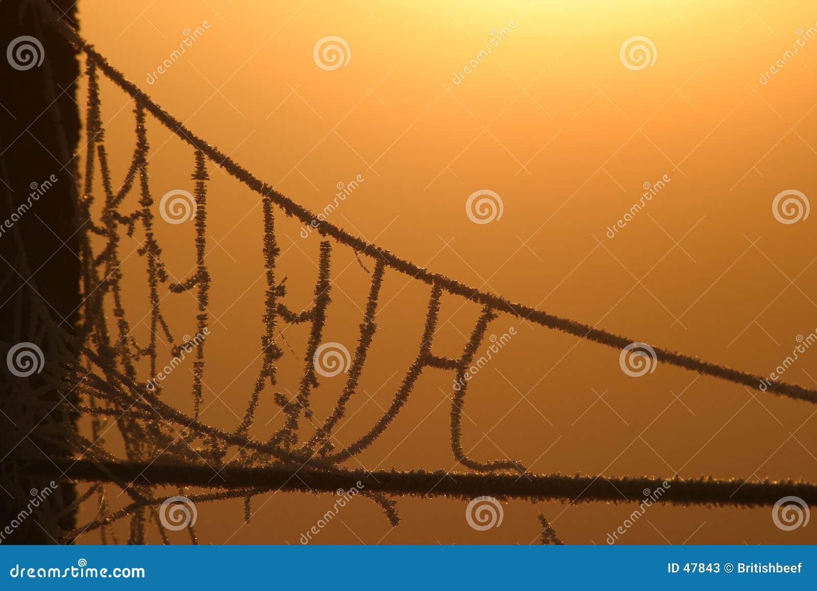 De hangbrug van de spin