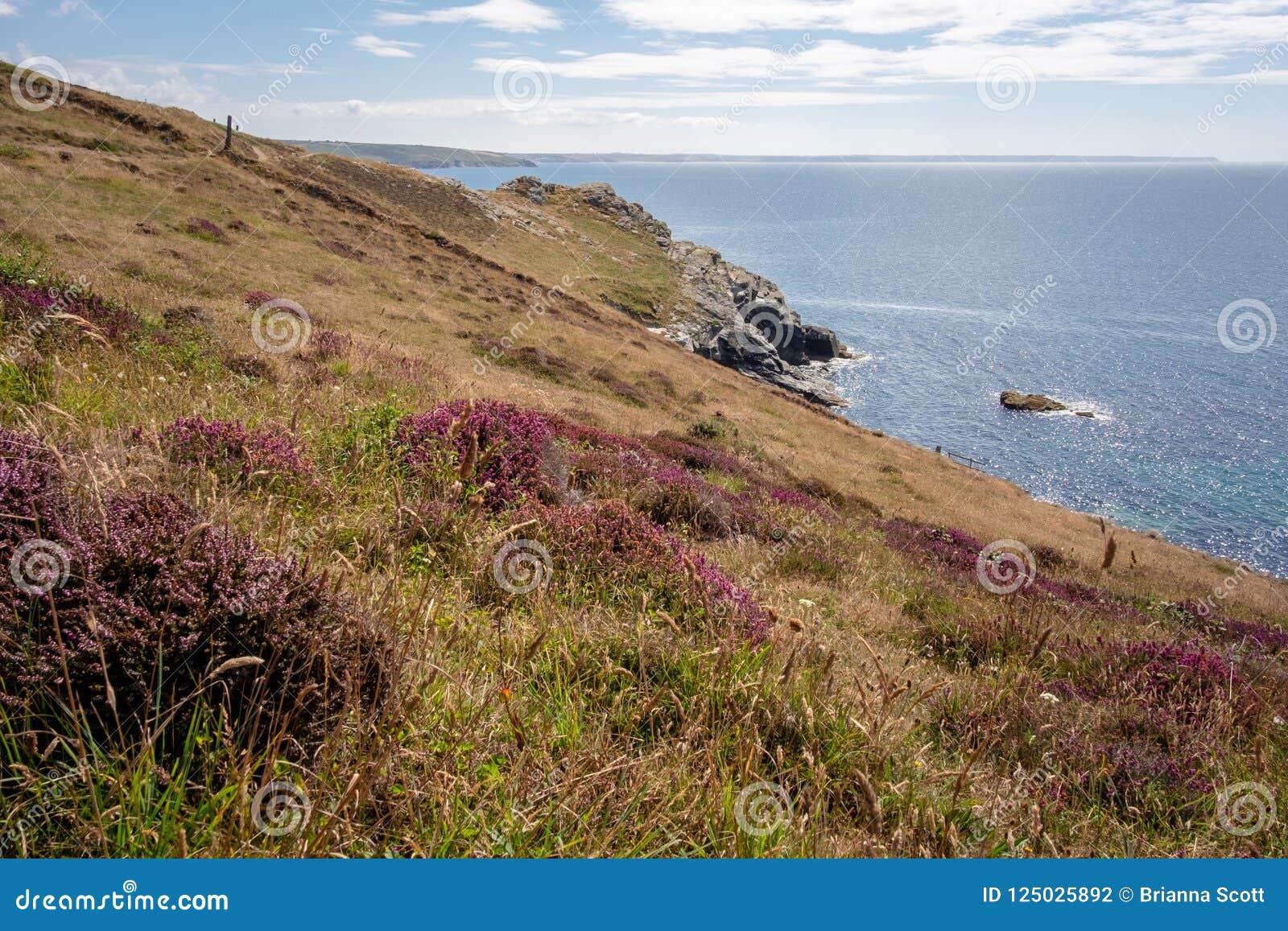 De heide groeit in Cornwall