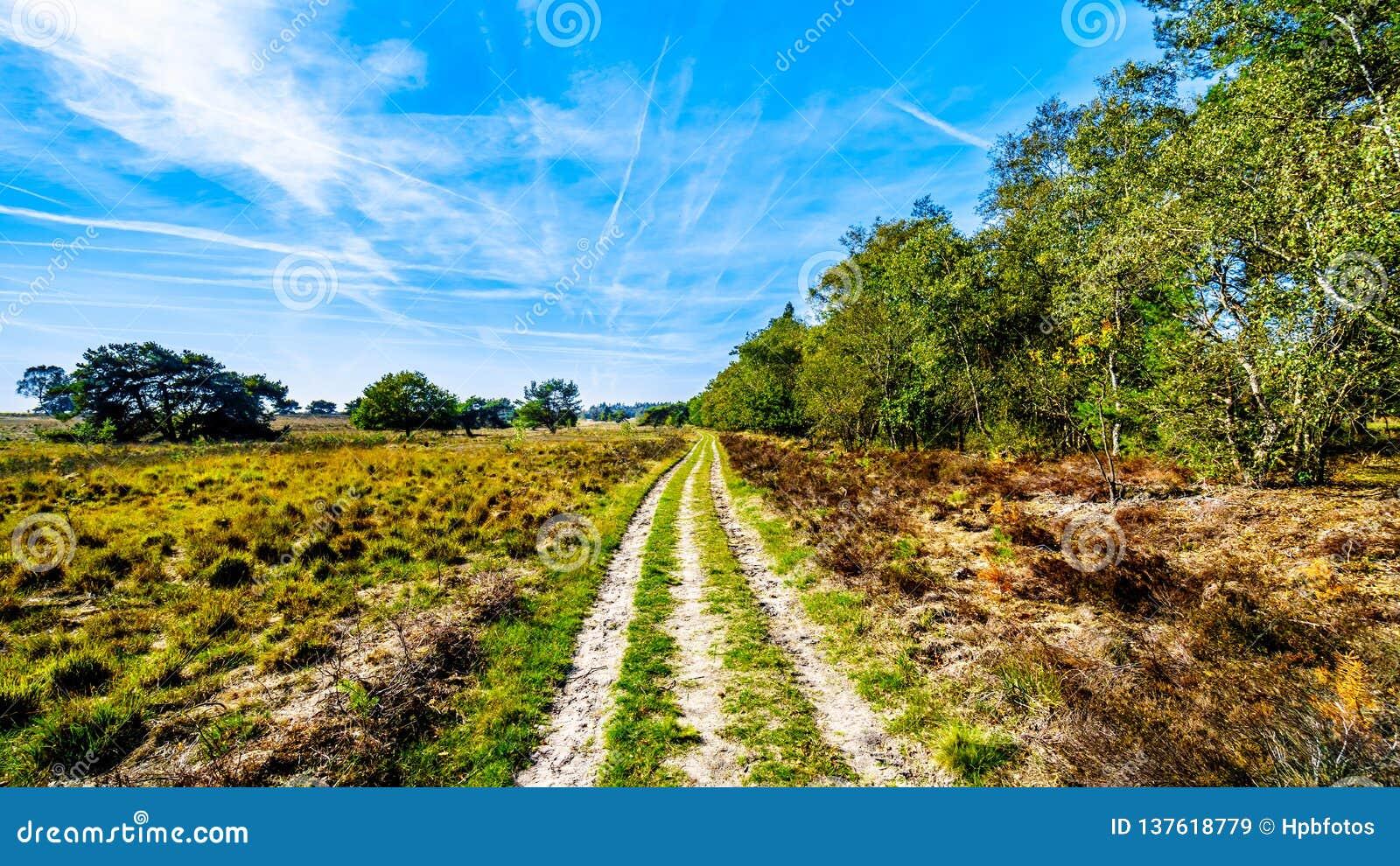 De de heidegebieden en bossen in het natuurreservaat van Hoge Veluwe