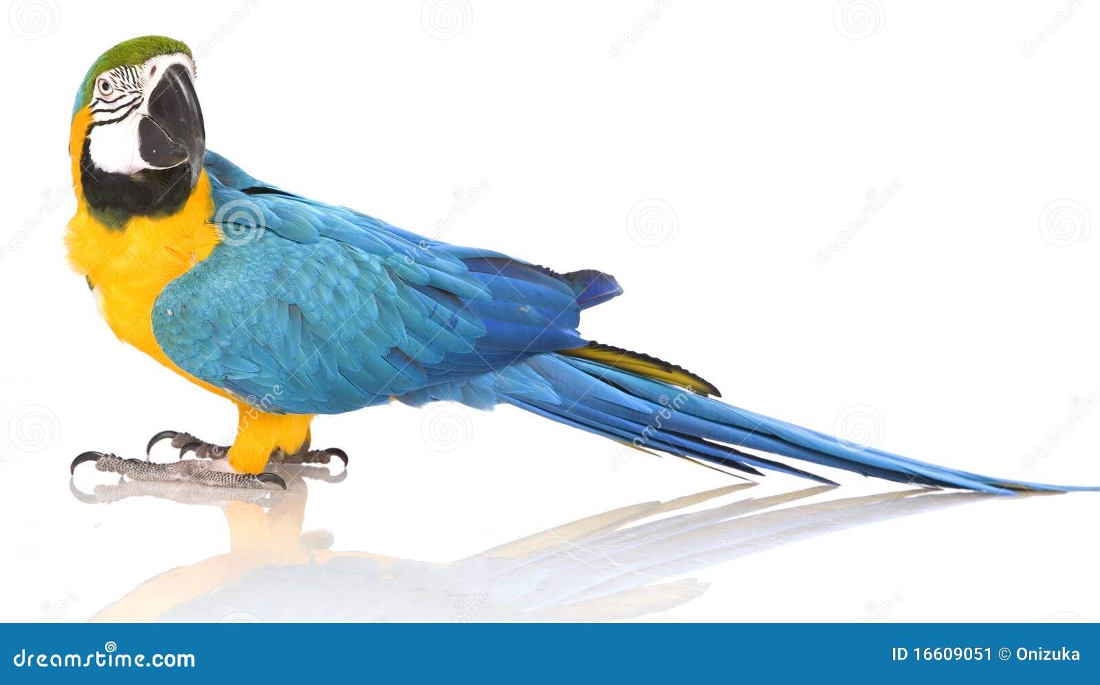 De heldere papegaai van Aronskelken