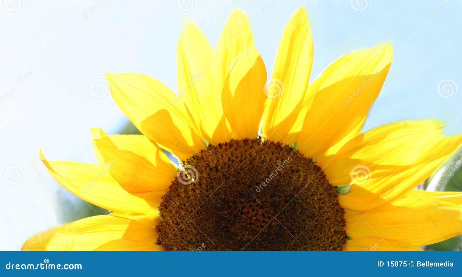 De helft van een bloem