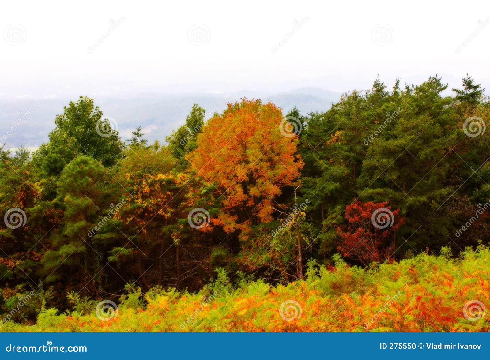 De herfst in bergen