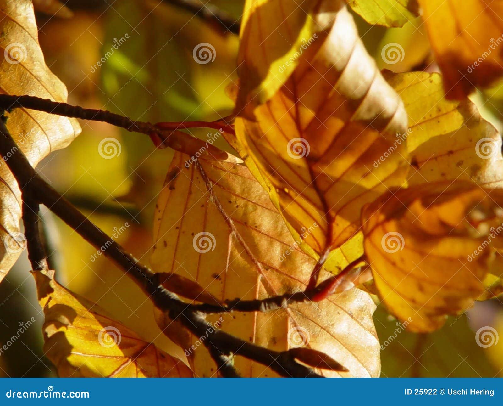 De herfst bladeren