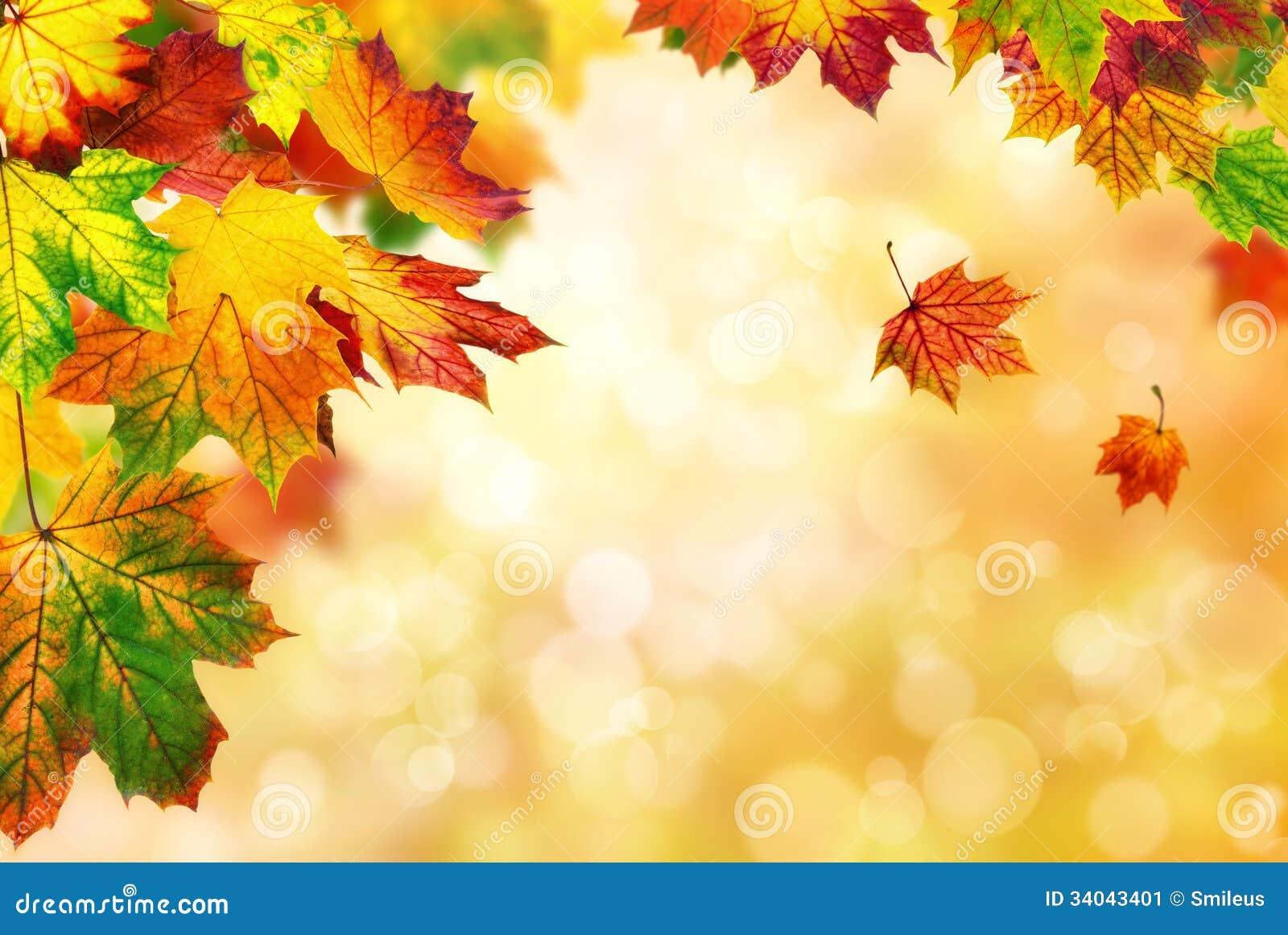 De gele achtergrond van de herfstbladeren royalty vrije stock ...
