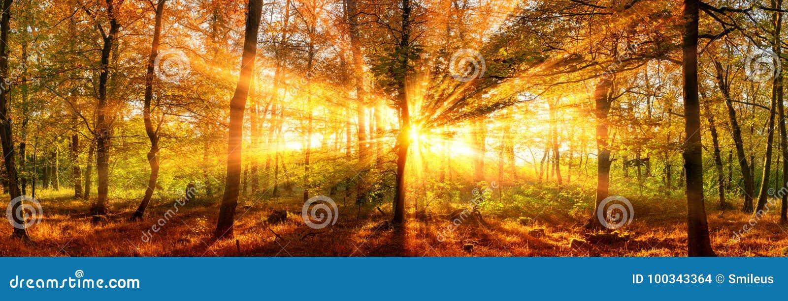De herfst bospanorama met levendige gouden zonnestralen