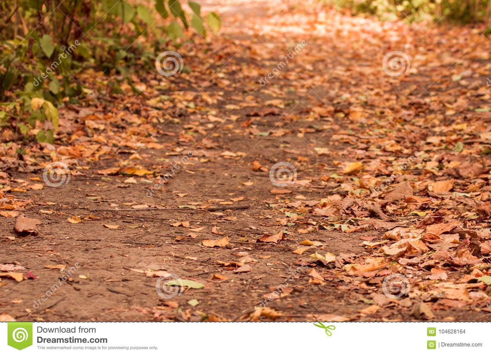 Download De Herfst Bosweg Met Gevallen Bladeren Stock Foto - Afbeelding bestaande uit takken, kleurrijk: 104628164