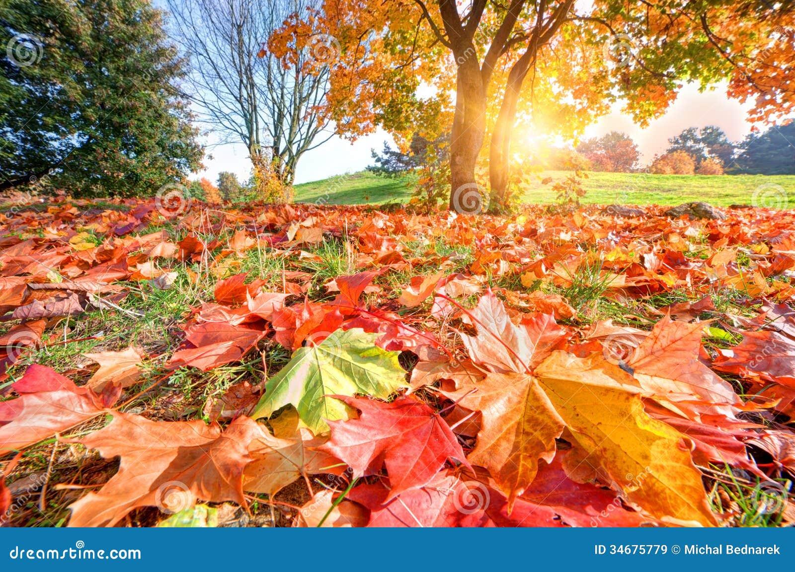 De herfst, dalingslandschap in park