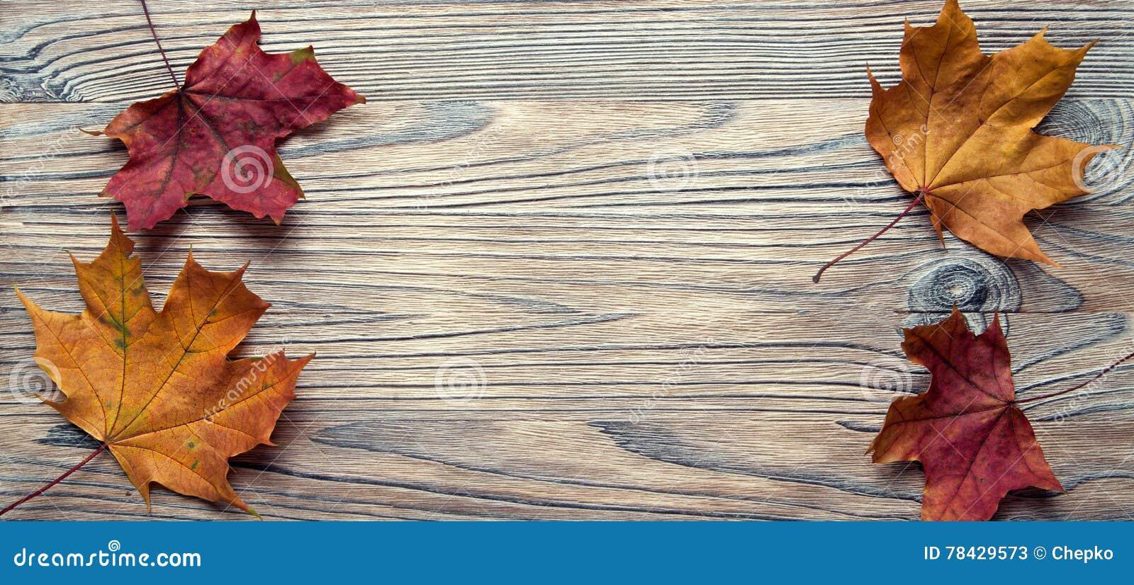 De herfst die op de boom met bladkader wordt geclassificeerd voor woorden en insc