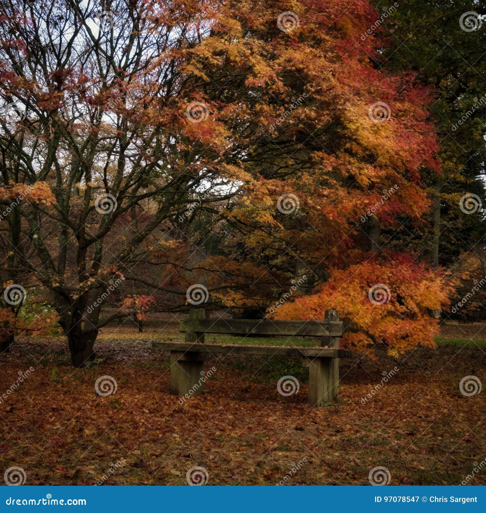 De herfst in Engels Park