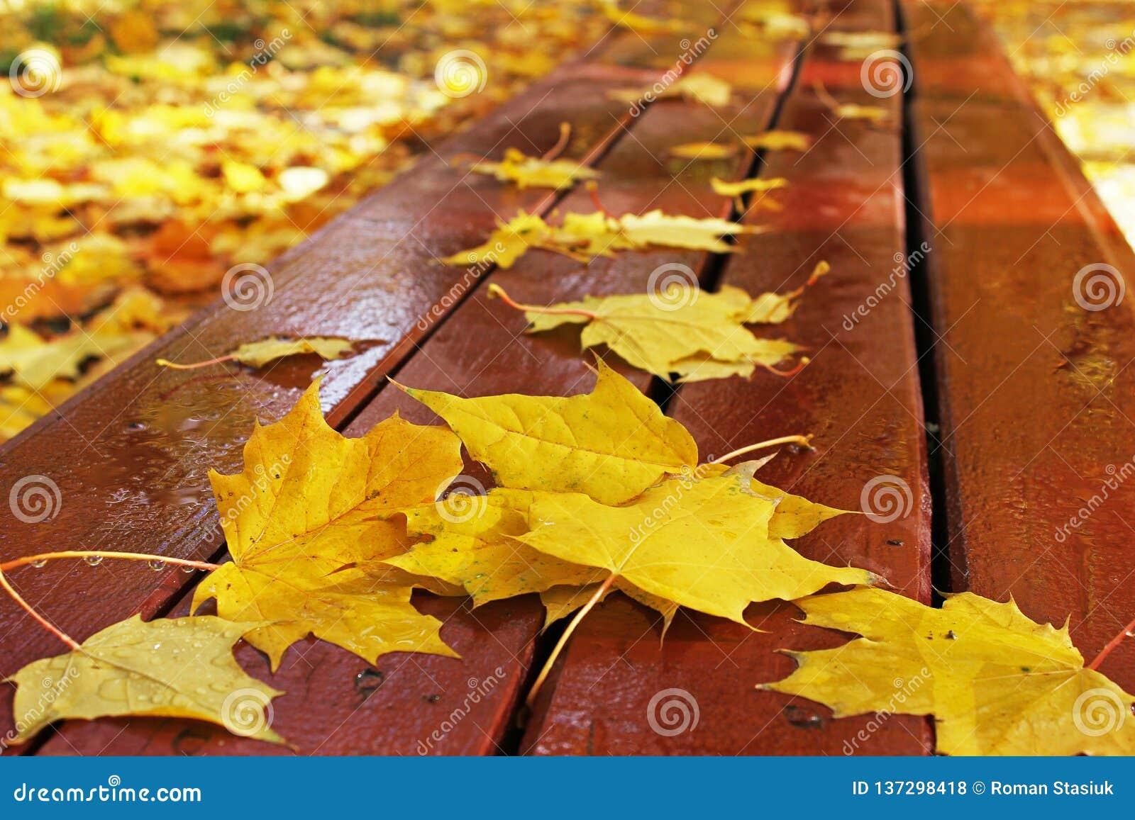 De herfst De herfstbladeren op een bank in het park